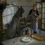 Bombolo – Il cane da guardia